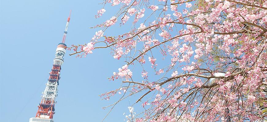 「桜商品特集 yahoo」的圖片搜尋結果