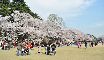 日本全國東京自由行旅遊全攻略推薦景點近郊野餐公園新宿御苑