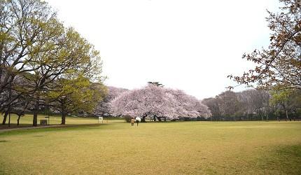 日本全國東京自由行旅遊全攻略推薦景點近郊野餐公園砧公園
