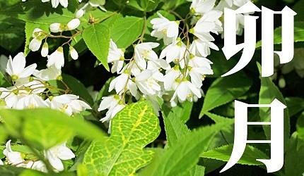 日本節氣12月份別稱由來日語卯月
