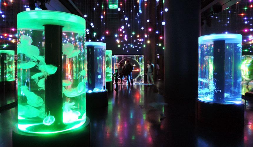 東京水族館樂園「Maxell Aqua Park 品川」的水母優游區