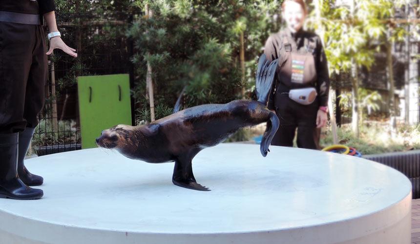 東京水族館樂園「Maxell Aqua Park 品川」「友好廣場」欣賞動物真人秀