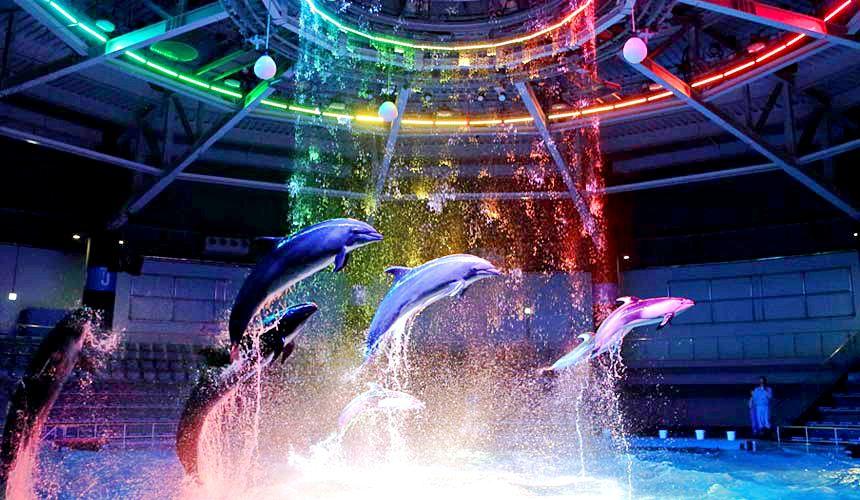 東京水族館樂園「Maxell Aqua Park 品川」音樂聲光環繞的精彩「海豚秀」