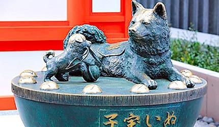 「水天宮」的「子寶犬」被眾多的參拜者摸成了金色