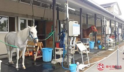 東京近郊景點推薦府中市東京賽馬場騎馬體驗