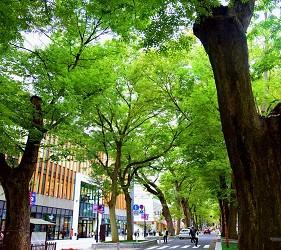 東京近郊景點推薦府中市大國魂神社綠色隧道