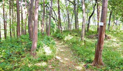 東京親子景點推薦龍貓森林嚕嚕米公園散步