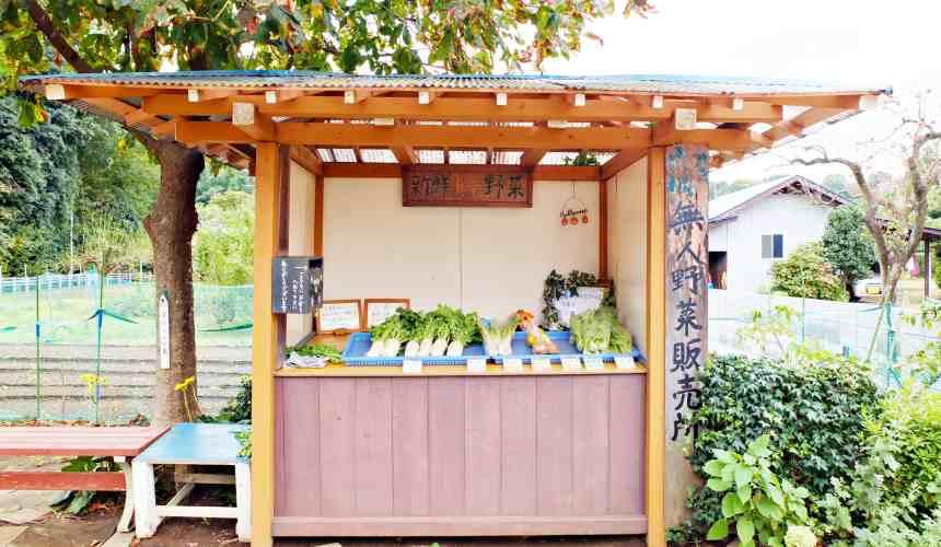 龍貓森林田園間有無人販賣蔬菜攤位