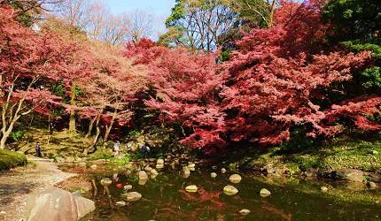東京小石川後樂園的紅葉
