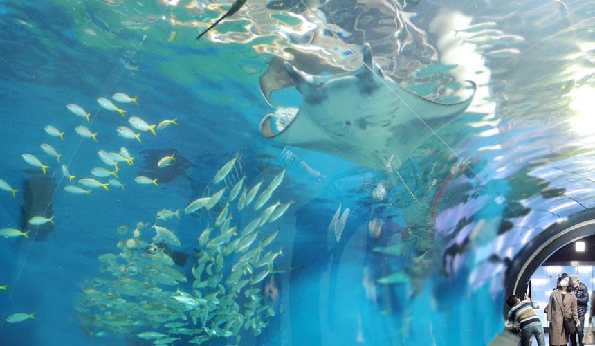 東京水族館樂園「Maxell Aqua Park 品川」的神奇通道