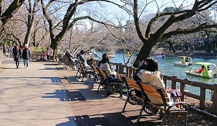 吉祥寺井之头公园日本东京自助自由行旅游推荐行程必访樱花季天鹅船