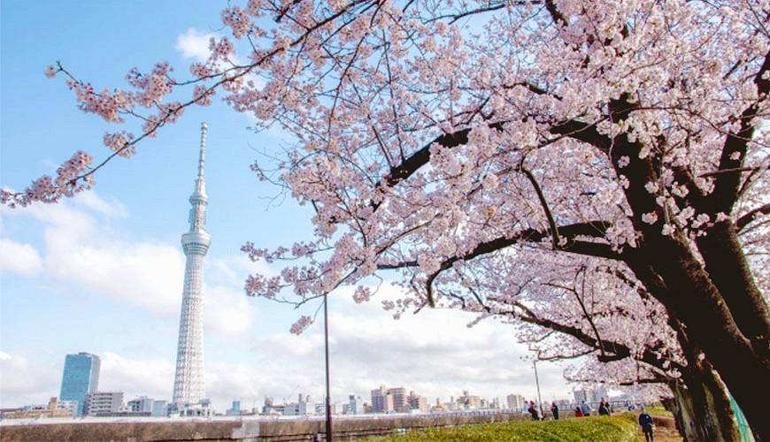 【日本旅遊穿衣指南】春天3月、4月、5月東京天氣與穿搭示範