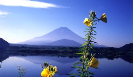 日本富士山附近的精進湖可以看的富士山湖