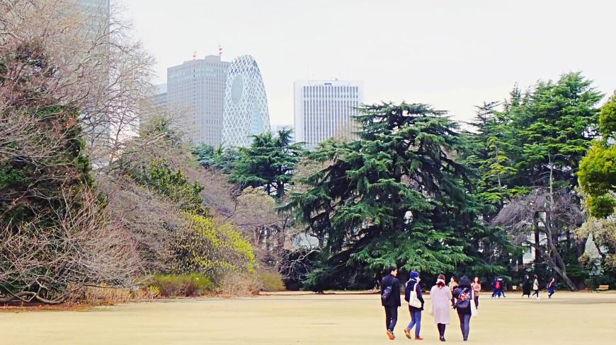 日本東京自由行自助旅遊旅行推薦第一次必去景點新宿御苑賞櫻賞楓攻略