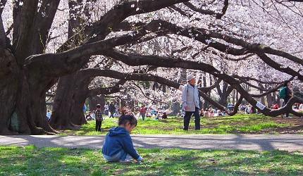 迎接东京樱花季!爱花成痴者不能错过的5条超美赏樱路缐