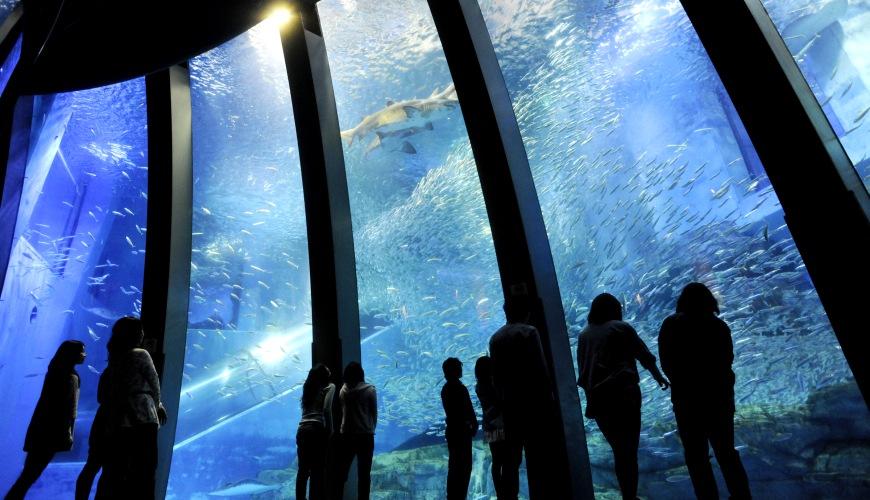 日本東京橫濱水族館八景島海島樂園「海洋之館 Aqua Museum」