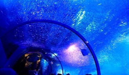 日本橫濱八景島海島樂園水族館「Aqua Museum」的海底隧道
