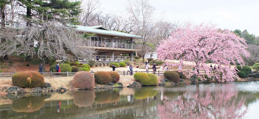 「新宿御苑」四季皆美,是新宿的後花園