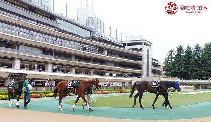 府中市东京赛马场围场赌马