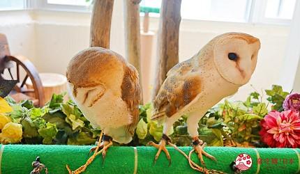 東京原宿貓頭鷹咖啡廳推薦「貓頭鷹庭園」店內的貓頭鷹「倉鴞」