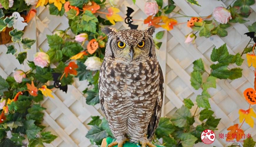 東京原宿貓頭鷹咖啡廳推薦!100%最萌最療癒的英國自然風「貓頭鷹庭園」