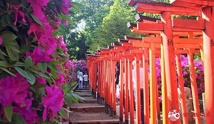 東京自由行上野景點根津神社杜鵑花季