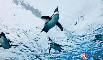 東京池袋百貨公司sunshinecity太陽城水族館天空企鵝