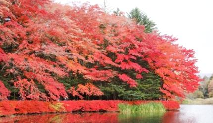 日本旅行東京近郊長野輕井澤秋天賞楓景點