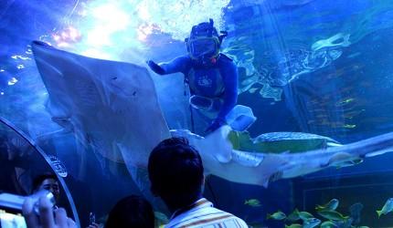 东京景点水族馆品川水族馆潜水员水中秀