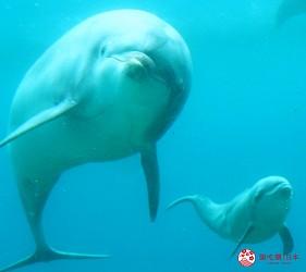 东京景点水族馆品川水族馆海豚宝宝