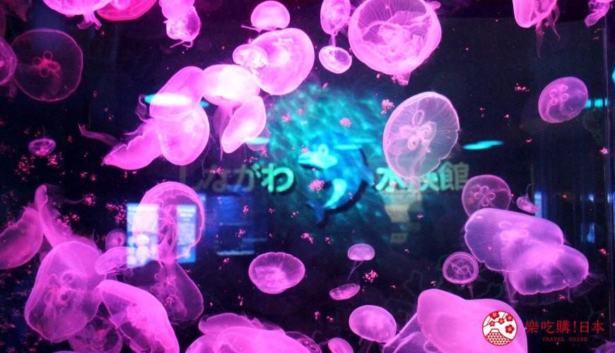 东京景点水族馆品川水族馆水母灯光秀