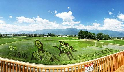 東京近郊長野景點安曇野稻田藝術節