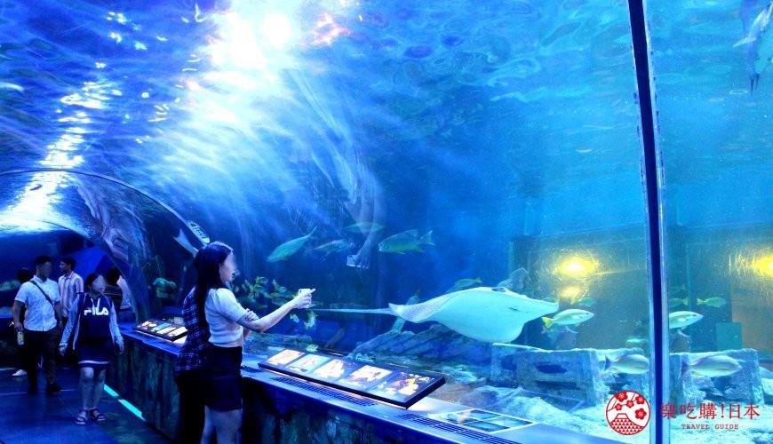 东京最超值水族馆!「品川水族馆」体验海豚秀、采珍珠,羽田机场出发只要20分!