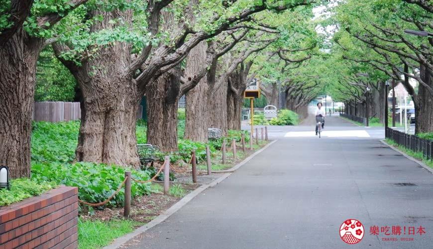 東京明治神宮外苑銀杏大道周邊景點推薦!從青山到神樂坂的優雅一日遊