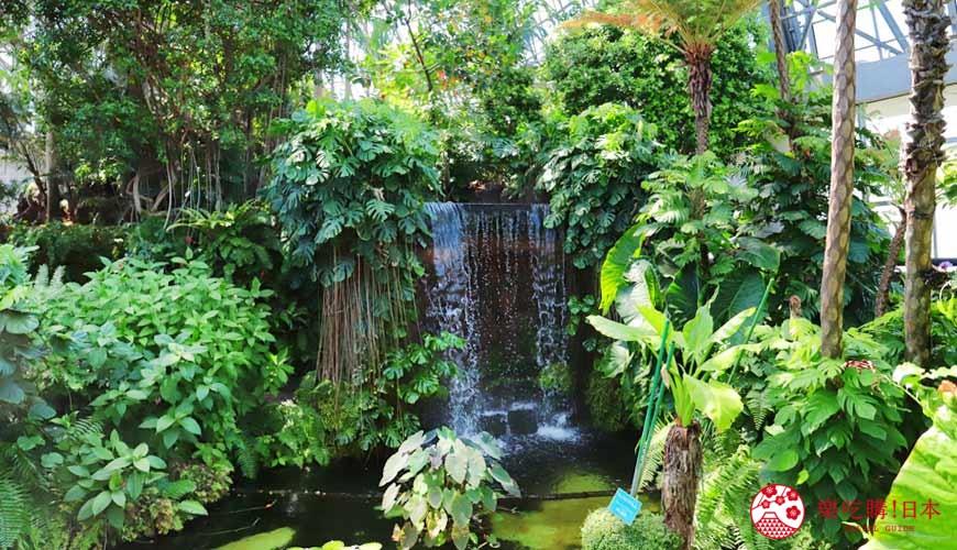 2019年2020年台场新木场观光购物景点梦之岛热带植物馆