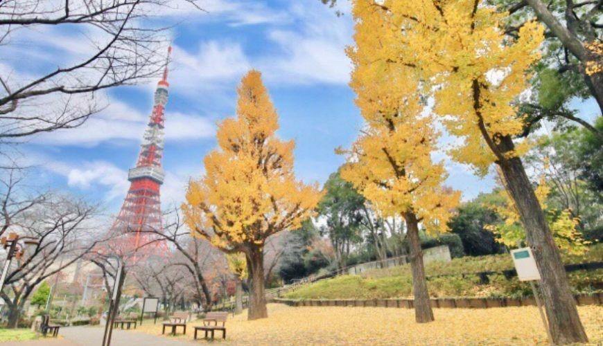 日本東京鐵塔附近的銀杏樹