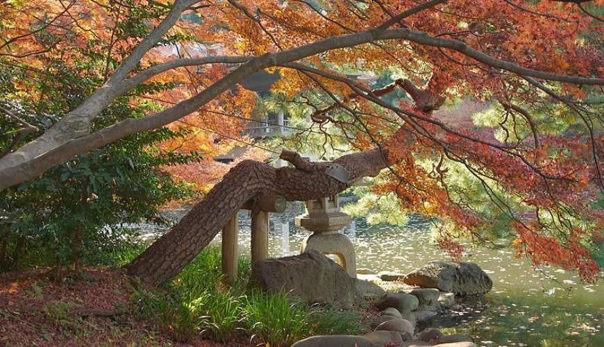 日本賞楓勝地新宿御苑內的紅葉