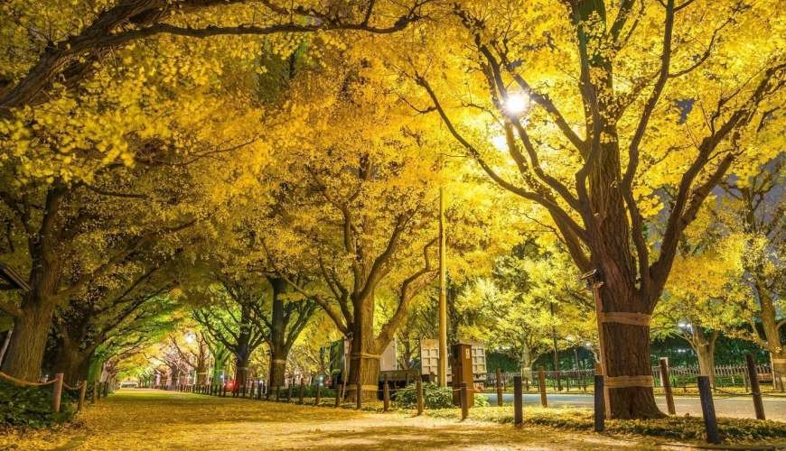 日本東京賞銀杏一定要去的神宮外苑
