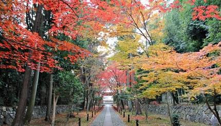 日本的必睇的秋季紅葉景色