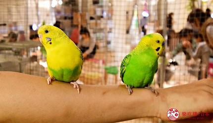 東京購物推薦aeonmall永旺夢樂城幕張新都心親子MOFF動物咖啡廳MOFFアニマルカフェ