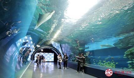 东京晚上夜间景点推荐水族馆MaxellAquapark品川