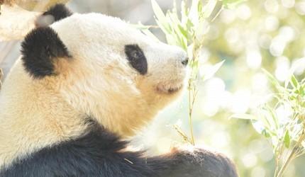 日本東京帶仔女自由行4日3夜交通行程懶人包推薦的上野動物園