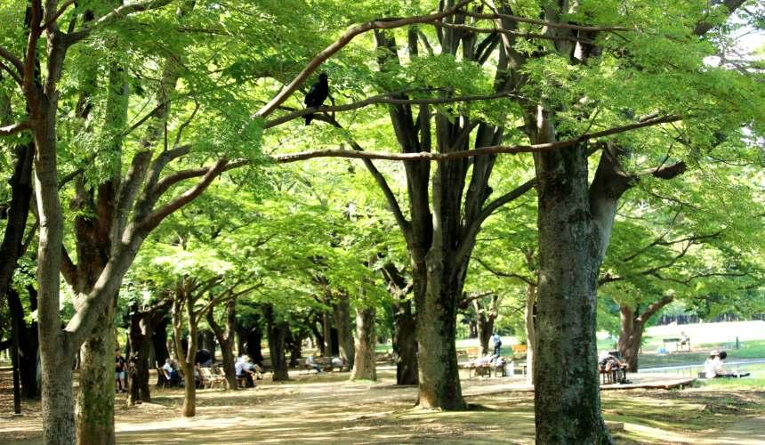 东京Metro一日券东京Metro地铁24小时车票推荐景点代代木公园