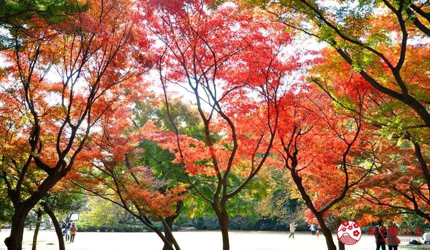 新宿御苑秋天成為賞楓葉銀杏的推薦人氣景點