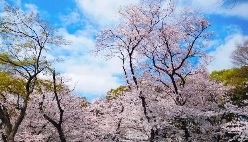 东京赏樱亲子游必到上野L'UENO吃日本最有名的速食LOTTERIA附近的上野公园