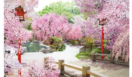 東京溫泉推介推薦台場大江戶溫泉物語足湯庭園邊泡足湯邊看櫻花